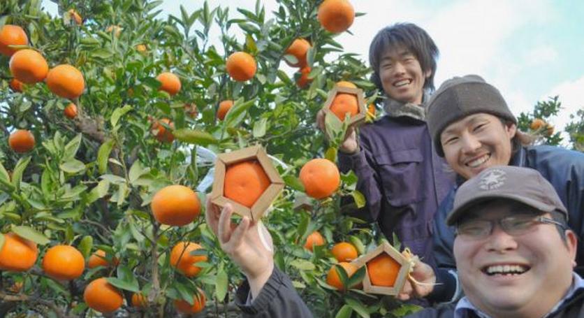 Dal Giappone le arance pentagonali...